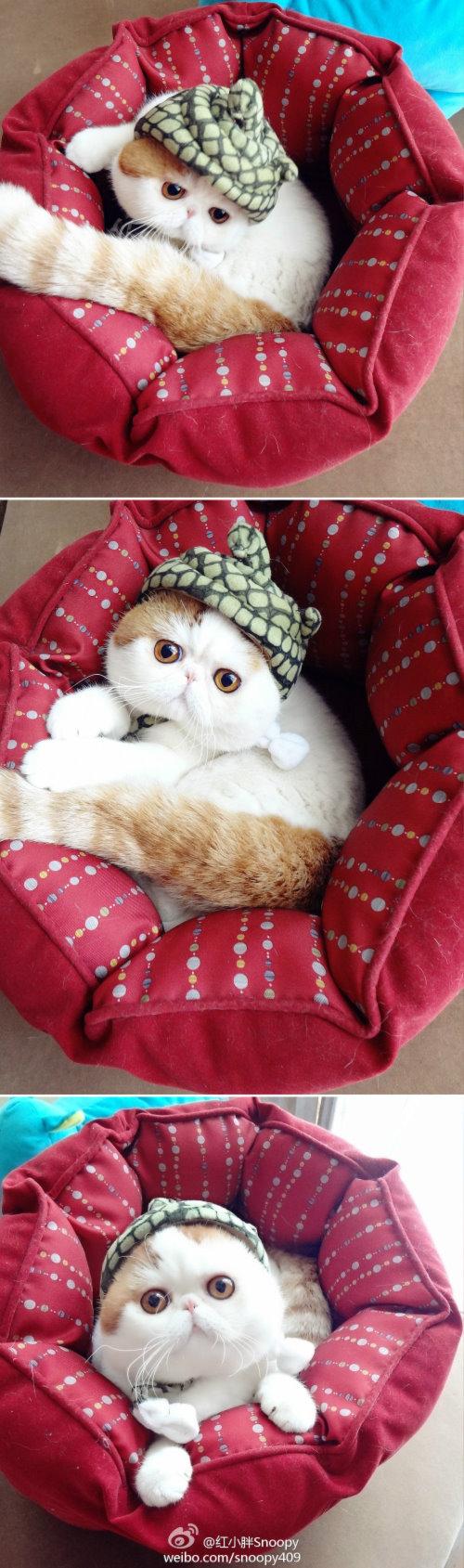 """Ảnh vui mèo: ngắm """"siêu mẫu"""" mèo kute nhất (30)"""