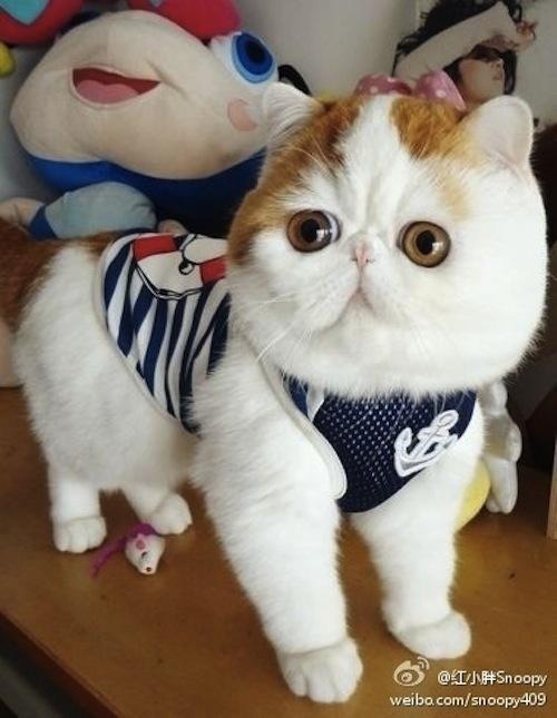 """Ảnh vui mèo: ngắm """"siêu mẫu"""" mèo kute nhất (29)"""