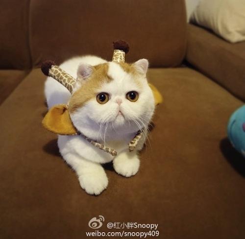 """Ảnh vui mèo: ngắm """"siêu mẫu"""" mèo kute nhất (28)"""