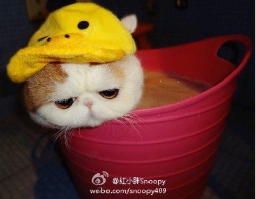 """Ảnh vui mèo: ngắm """"siêu mẫu"""" mèo kute nhất (26)"""