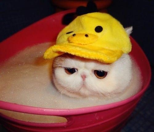 """Ảnh vui mèo: ngắm """"siêu mẫu"""" mèo kute nhất (25)"""