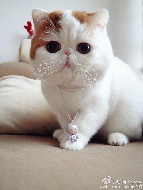 """Ảnh vui mèo: ngắm """"siêu mẫu"""" mèo kute nhất (24)"""