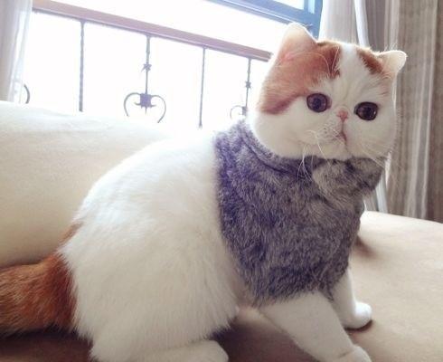 """Ảnh vui mèo: ngắm """"siêu mẫu"""" mèo kute nhất (23)"""