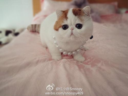 """Ảnh vui mèo: ngắm """"siêu mẫu"""" mèo kute nhất (22)"""