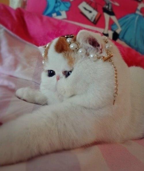 """Ảnh vui mèo: ngắm """"siêu mẫu"""" mèo kute nhất (21)"""