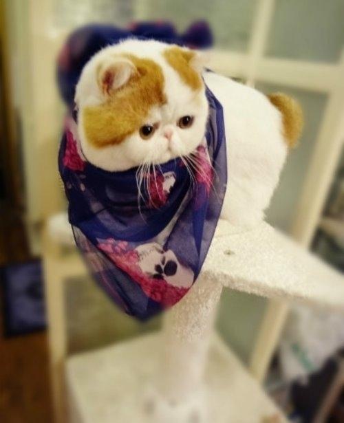 """Ảnh vui mèo: ngắm """"siêu mẫu"""" mèo kute nhất (20)"""