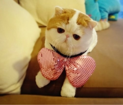 """Ảnh vui mèo: ngắm """"siêu mẫu"""" mèo kute nhất (19)"""