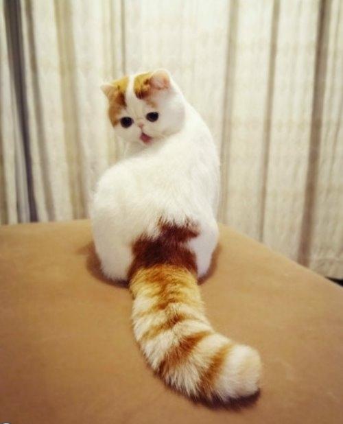"""Ảnh vui mèo: ngắm """"siêu mẫu"""" mèo kute nhất (18)"""