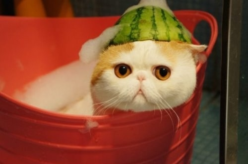 """Ảnh vui mèo: ngắm """"siêu mẫu"""" mèo kute nhất (17)"""