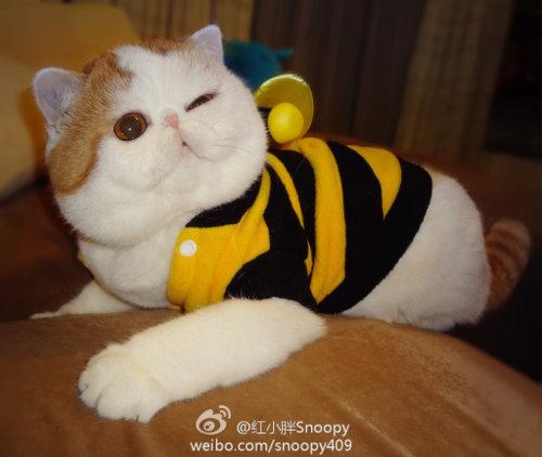 """Ảnh vui mèo: ngắm """"siêu mẫu"""" mèo kute nhất (2)"""