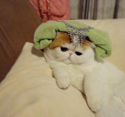 """Ảnh vui mèo: ngắm """"siêu mẫu"""" mèo kute nhất (16)"""
