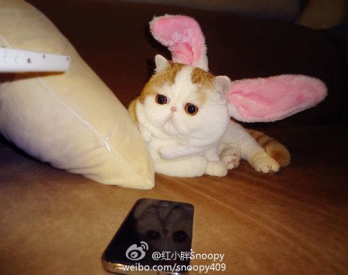 """Ảnh vui mèo: ngắm """"siêu mẫu"""" mèo kute nhất (15)"""