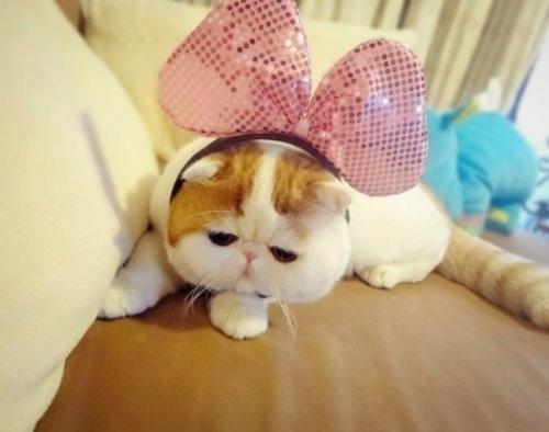"""Ảnh vui mèo: ngắm """"siêu mẫu"""" mèo kute nhất (13)"""