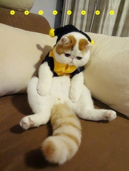 """Ảnh vui mèo: ngắm """"siêu mẫu"""" mèo kute nhất (10)"""