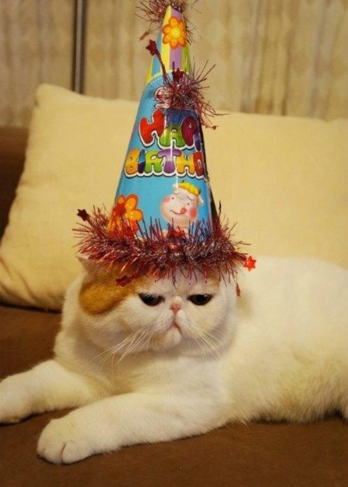 """Ảnh vui mèo: ngắm """"siêu mẫu"""" mèo kute nhất (9)"""