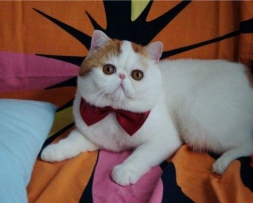 """Ảnh vui mèo: ngắm """"siêu mẫu"""" mèo kute nhất (8)"""