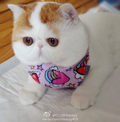 """Ảnh vui mèo: ngắm """"siêu mẫu"""" mèo kute nhất (7)"""