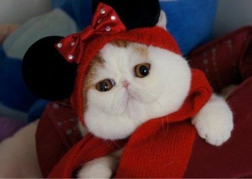 """Ảnh vui mèo: ngắm """"siêu mẫu"""" mèo kute nhất (1)"""