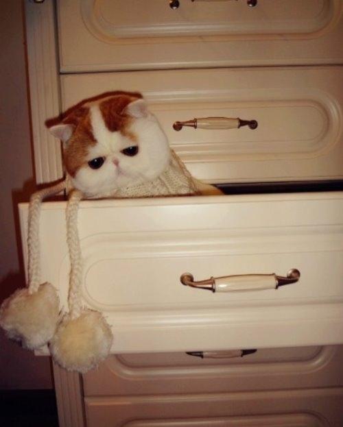 """Ảnh vui mèo: ngắm """"siêu mẫu"""" mèo kute nhất (59)"""