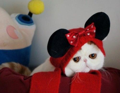 """Ảnh vui mèo: ngắm """"siêu mẫu"""" mèo kute nhất (58)"""