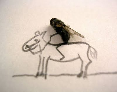 Funny-House-Flies-4