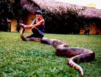 Những con Anaconda lớn nhất có thể dài hơn 10m, nặng 750kg.