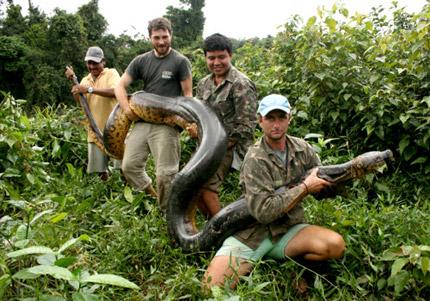 Những hình ảnh về loài trăn Anaconda Nam Mỹ