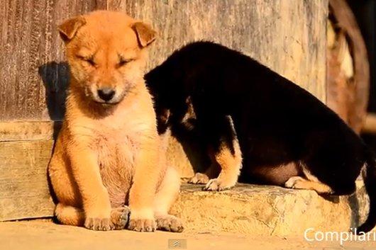 [Video] Khi động vật buồn ngủ