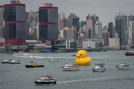 Vịt cao su khổng lồ tiến vào cảng Hồng Kông (3)