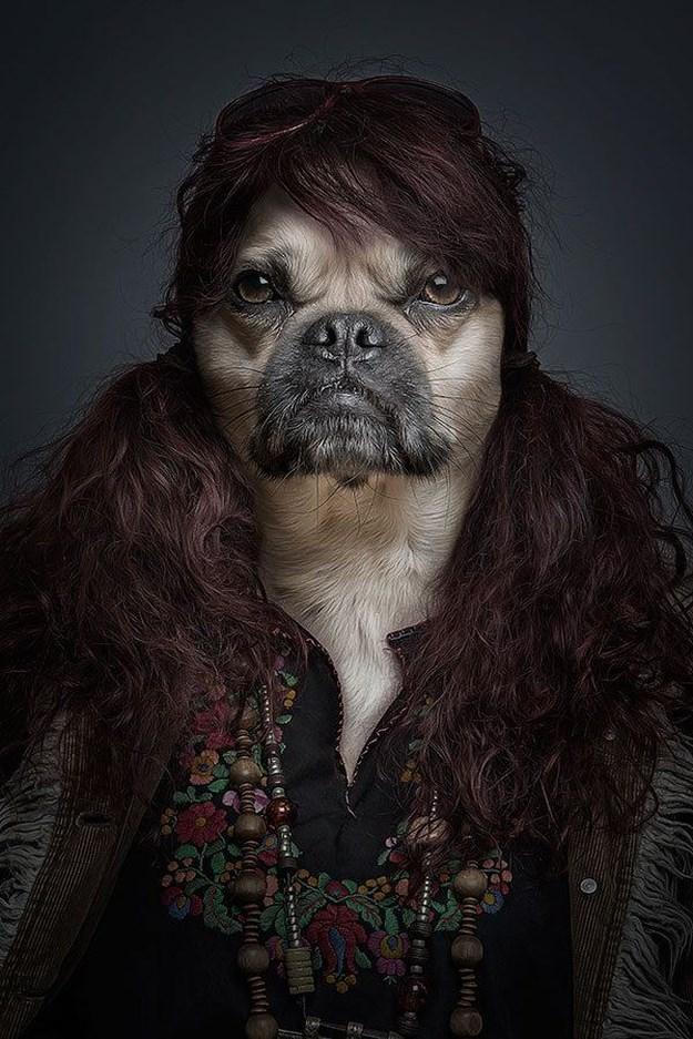Khi những chú chó mặc quần áo như ... người (7)