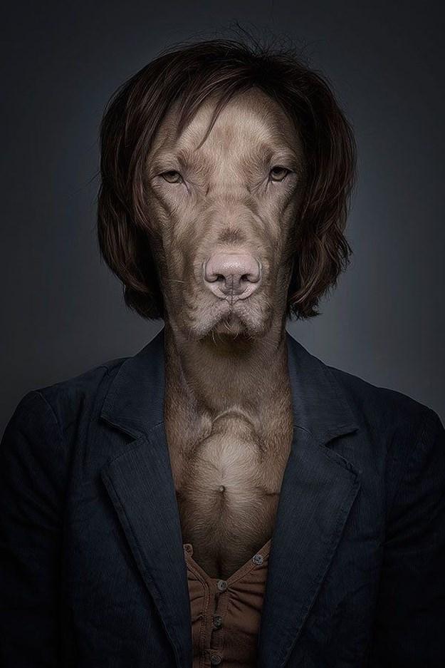 Khi những chú chó mặc quần áo như ... người (6)