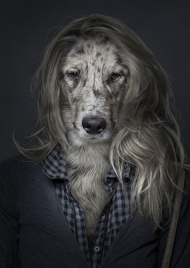 Khi những chú chó mặc quần áo như ... người (5)