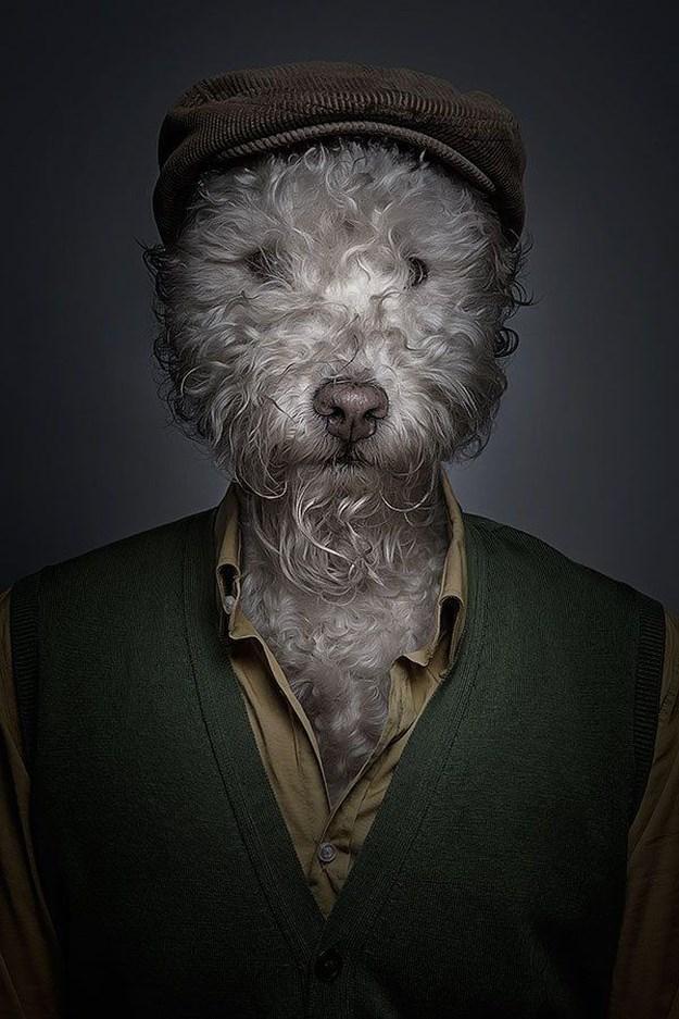 Khi những chú chó mặc quần áo như ... người (4)