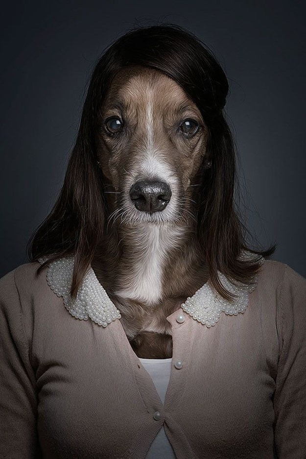 Khi những chú chó mặc quần áo như ... người (3)