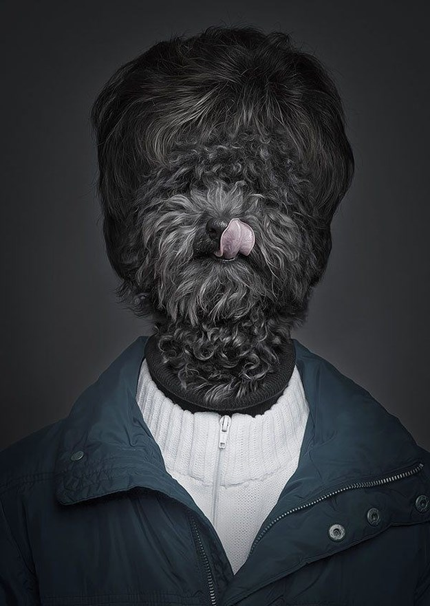 Khi những chú chó mặc quần áo như ... người (2)