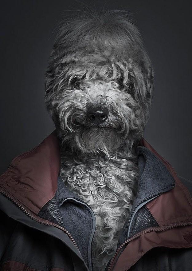 Khi những chú chó mặc quần áo như ... người (1)