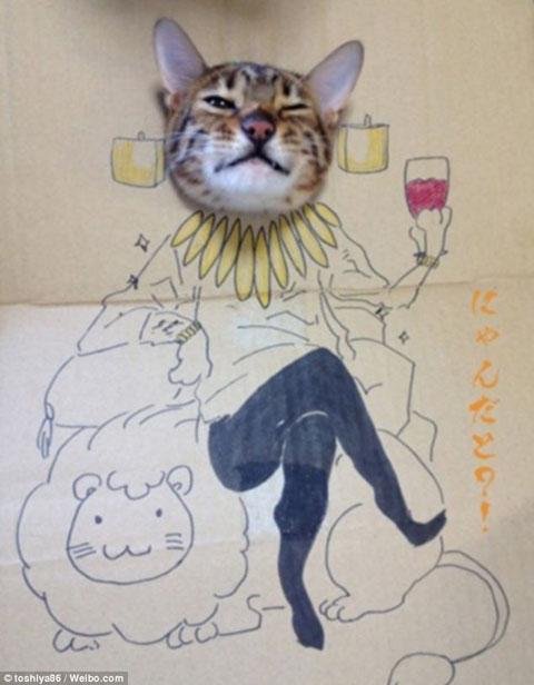 Vua mèo