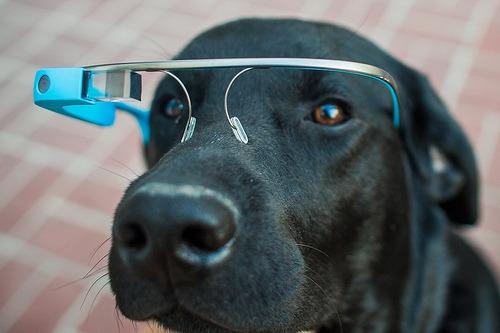 Google-Glass được trang bị cho chó nghiệp vụ