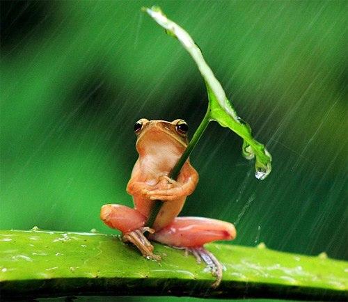 Thú vị với chú ếch con trú mưa (2)
