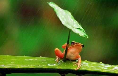 Thú vị với chú ếch con trú mưa (1)