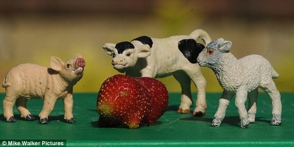 Trái dâu chuột lang đặt cạnh những con thú đồ chơi khác.