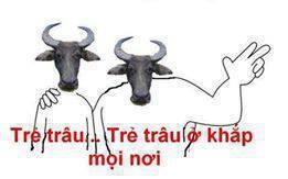 http://nhungdieuthuvi.com/wp-content/uploads/2013/08/tre-trau-tre-trau-o-khap-moi-noi.jpg