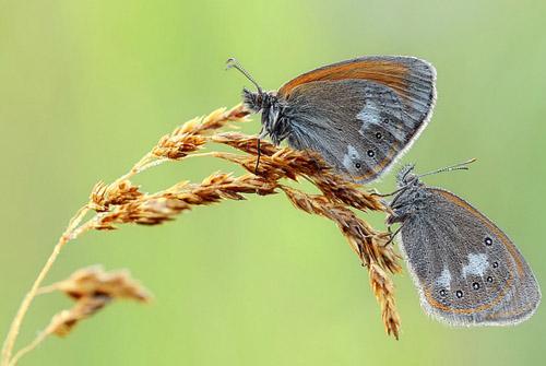 Lung linh hoa, bướm của Simone Noll (12)