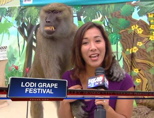 Chú khỉ hồn nhiên cười trên truyền hình sau khi có hành vi sàm sỡ.