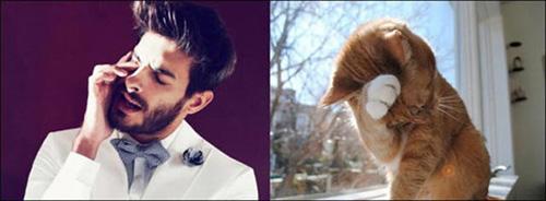Ảnh vui: mèo tạo dáng như các nam tài tử Hollywood (14)
