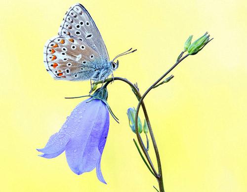 Lung linh hoa, bướm của Simone Noll (11)