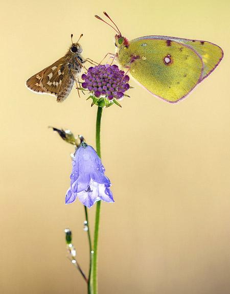 Lung linh hoa, bướm của Simone Noll (10)