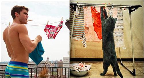 Ảnh vui: mèo tạo dáng như các nam tài tử Hollywood (12)