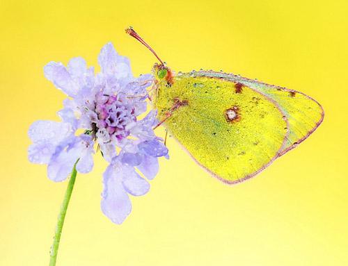 Lung linh hoa, bướm của Simone Noll (9)