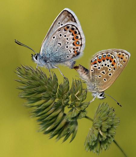 Lung linh hoa, bướm của Simone Noll (8)